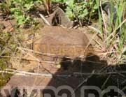 Гусеничный кран ДЭК-251 Ханты-Мансийск